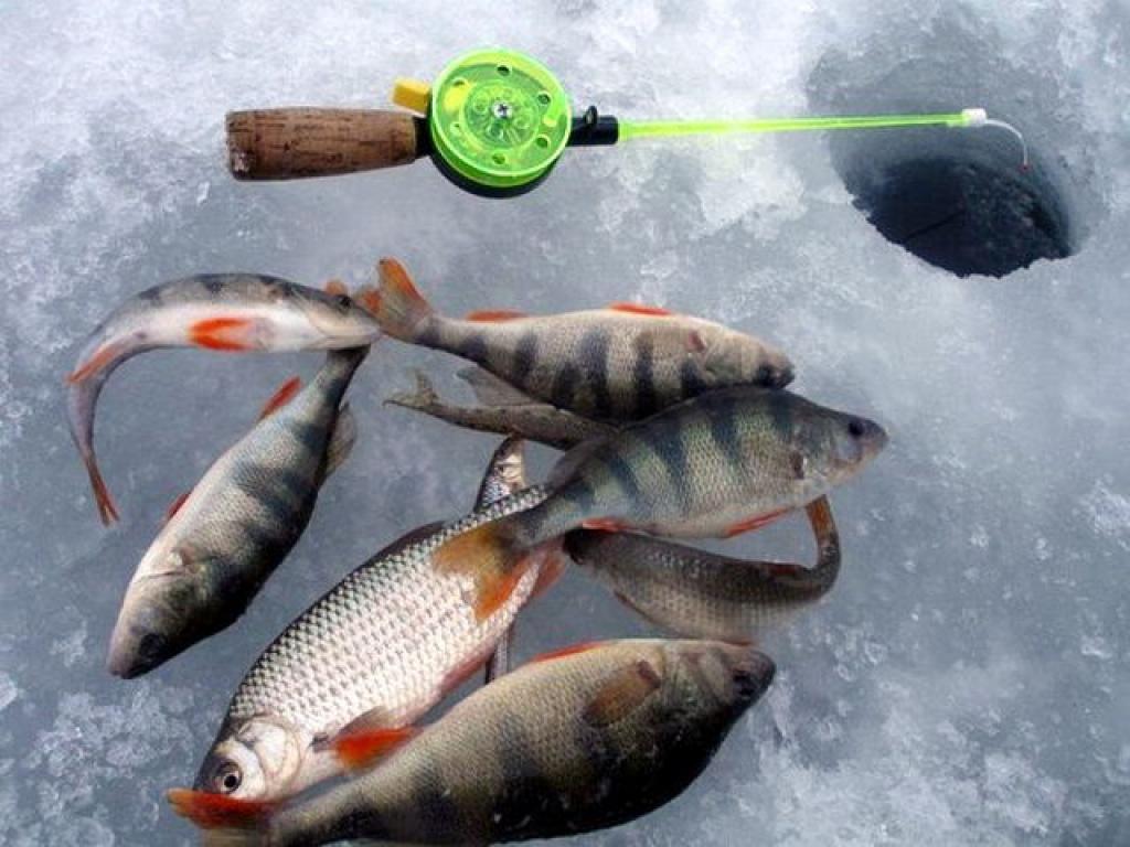 клев рыбы в свирске